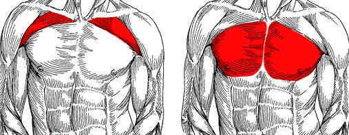 عضله درگیر در پرس بالا سینه