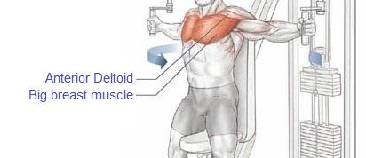 عضله درگیر در حرکت فلای با دستگاه